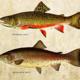 Canceled -- Fishmas Day