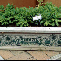 CANCELLED Raised Bed Gardening