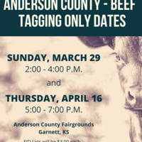 Anderson County 4-H Beef Tagging