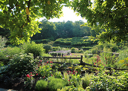 Jul 18, 2020: Saturday Garden Tours at Cornell Botanic Gardens
