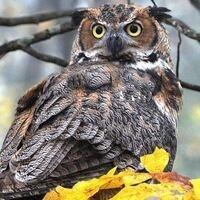 Wings of Wonder: WV Birds of Prey