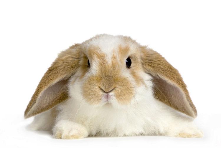 Pee Dee Region 4-H Rabbit Project Registration