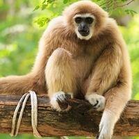 Toronto Zoo: Daily Facebook Live
