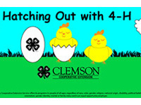 SC Hatching our with 4-H, Online Embryology