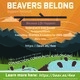 Beavers Belong