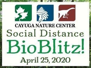 Social Distance BioBlitz 2020