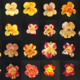 Alumni Virtual Event: Evolution of Color Pattern in Monkeyflowers