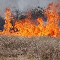 Photo of cheatgrass on fire.