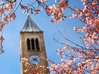 McGraw Tower among pink spring flowers