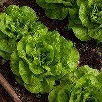 Webinar - Planning a Vegetable Garden