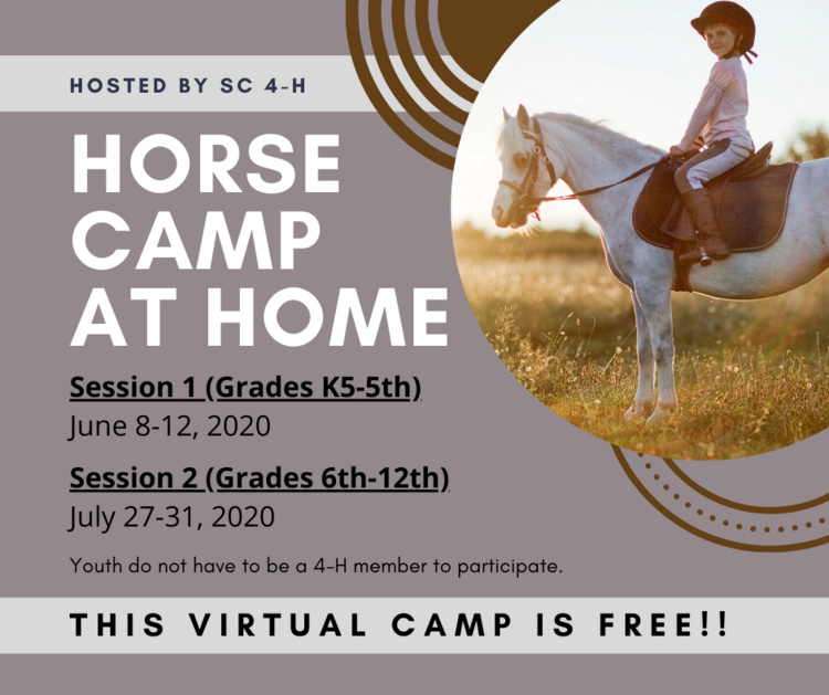 Horse Camp at Home - Session 2 (Grade 6th-12th)