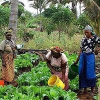 The Post-Conflict Window: Advancing Women's Role in Economic and Climate Resilience