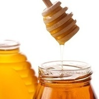 Full Day Wild Kratts Day Camp: Honey Seekers (Ages 7-8)