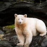 Full Day Wild Kratts Camp: Spirit Bear (Ages 7-8)