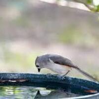 Concrete Crafting: Leaf Bird Baths