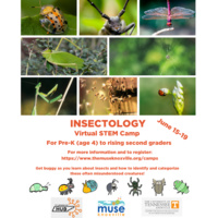 Insectology - Virtual STEM Camp