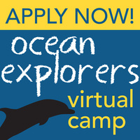 Ocean Explorers Virtual Summer Camp