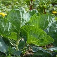 Webinar - Vegetable Gardening Best Practices for Food Safety