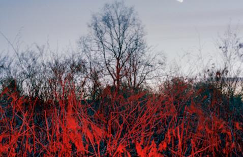 """""""Red Dusk"""" by Caterina Maina"""