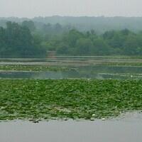 The Wonders of Wetlands (Wow) Educator Workshop