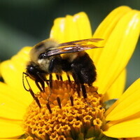 Science in the Park: Bees