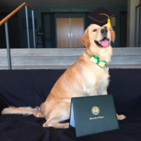 Our office dog, Sam Rose, offering his congratulations to all of our wonderful students.