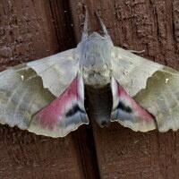 National Moth Week Presentation