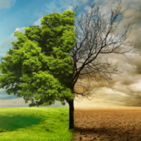 Climate change illustration showing a tree in two halves, one health and the other dead