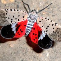 Science in the Park: Invasive Species