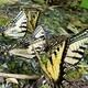 Let's Talk Butterflies Hike!