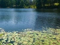 Healthy Ponds: Managing Water Quality and Aquatic Weeds