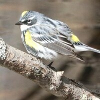 Bird Walk with Doug Gross