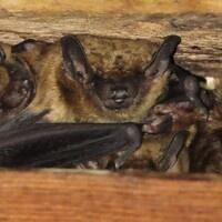 2020 Bat Count