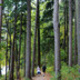 Beautiful Beltzville Hiking Series: Preachers Camp Trail Hike