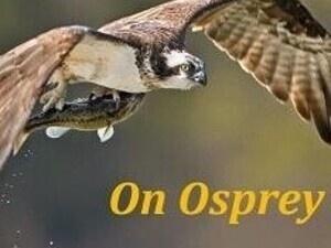 New! Osprey Eco-Cruise