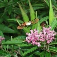 Butterflies by Binoculars Preregistration required.