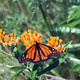 Let's Talk Butterflies Hike!