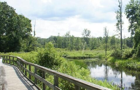 Guided Nature Walk and Rice Creek Field Station Tour