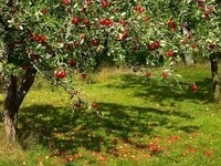 CANCELLED- Lunch and Learn with Clemson Extension: Apples, Choosing the Ripe One