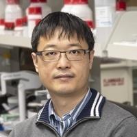 "Zilkha Virtual Seminar Series - Baohua Liu PhD: ""Interrogating the Brain Circuit Involved in the Cortical Control of Innate Behavior"""