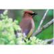 Virtual: Birding Basics