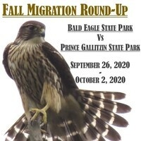 Fall Migration Round-Up