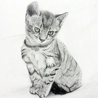 *ONLINE* Pet Portraits Workshop