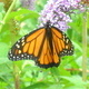 Monarch Hike with Samuel