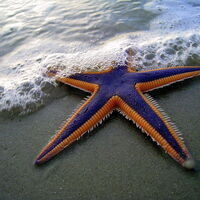 The Astonishing Architecture of Fossil Starfish