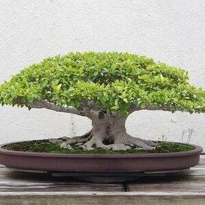 Make and Take Bonsai Trees