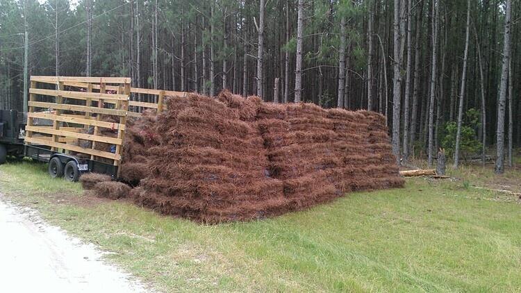 Pine Straw Webinar Series