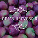 Webinar - Hope's Harvest RI: Saving Produce from RI Farms