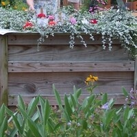 REGISTRATION HAS CLOSED FOR THIS WORKSHOP    Raised Beds and Table Gardens Workshop Online