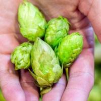 FST Farm 2 Fork - Oregon Hop Terroir: Exploring the Regional Hops within the Willamette Valley
